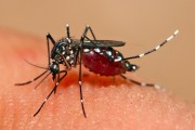 Taiwan reports more dengue cases
