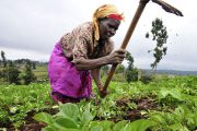 Food security: much more than food production, distribution and consumption